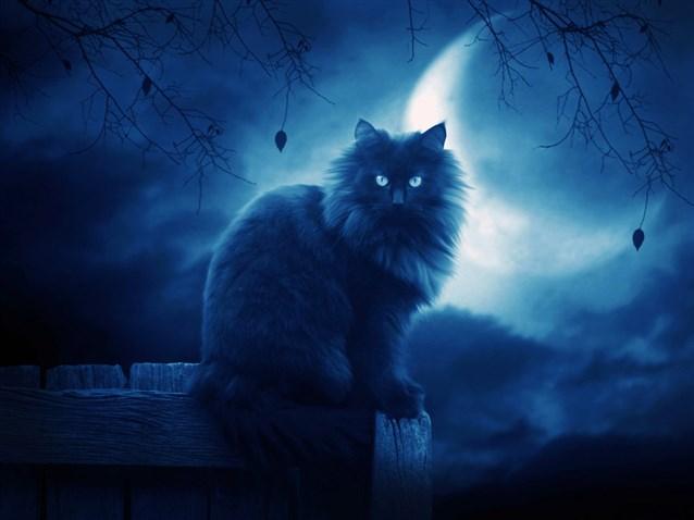 القطة السوداء