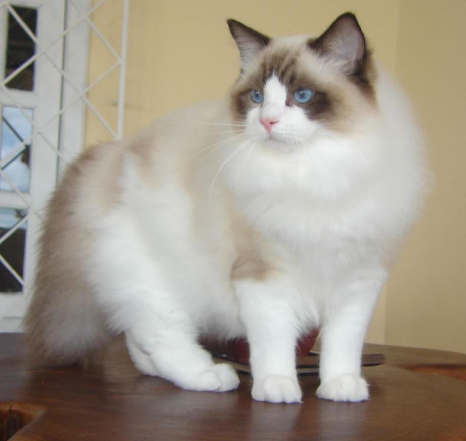 إزالة شعر القطط من الملابس والاثاث