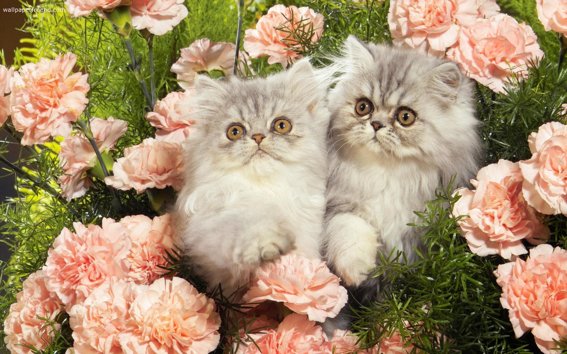 أهم عشرة حقائق عن القطط