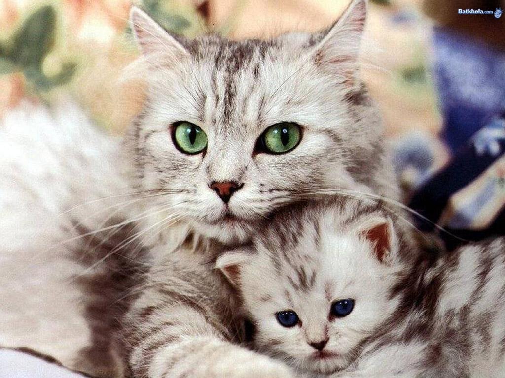 معلومات أساسية عن القطط