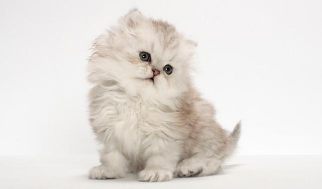 طريقة تربية القطط الصغيرة