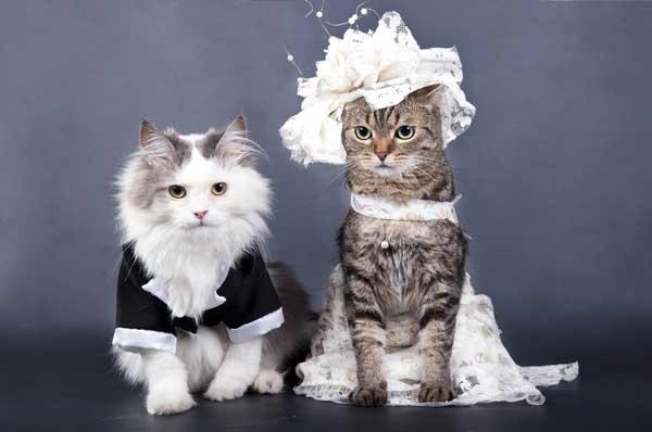 الزواج والحمل عند القطط