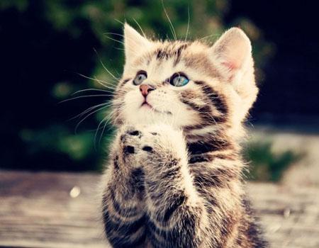 حقائق واسرار لا تعرفها عن القطط