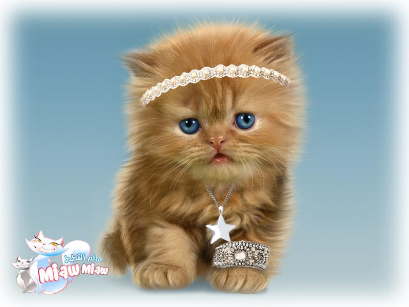 أجمل صور للقطط الصغيرة