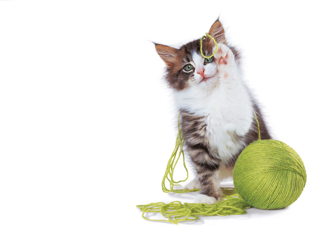 How to train cats when you call