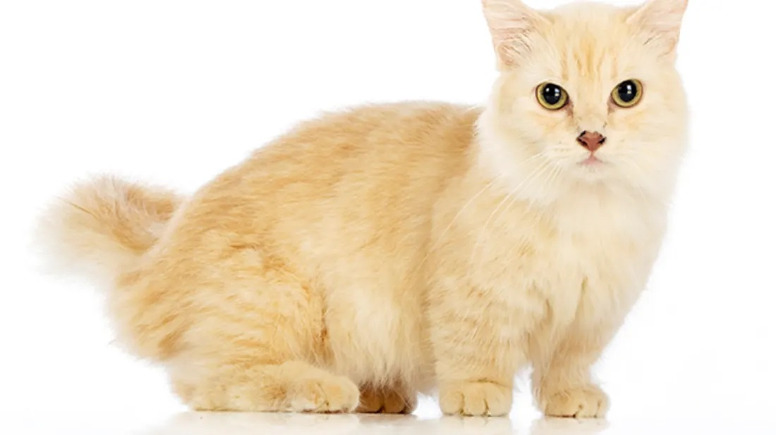 The most interesting information about the types of dwarf cats