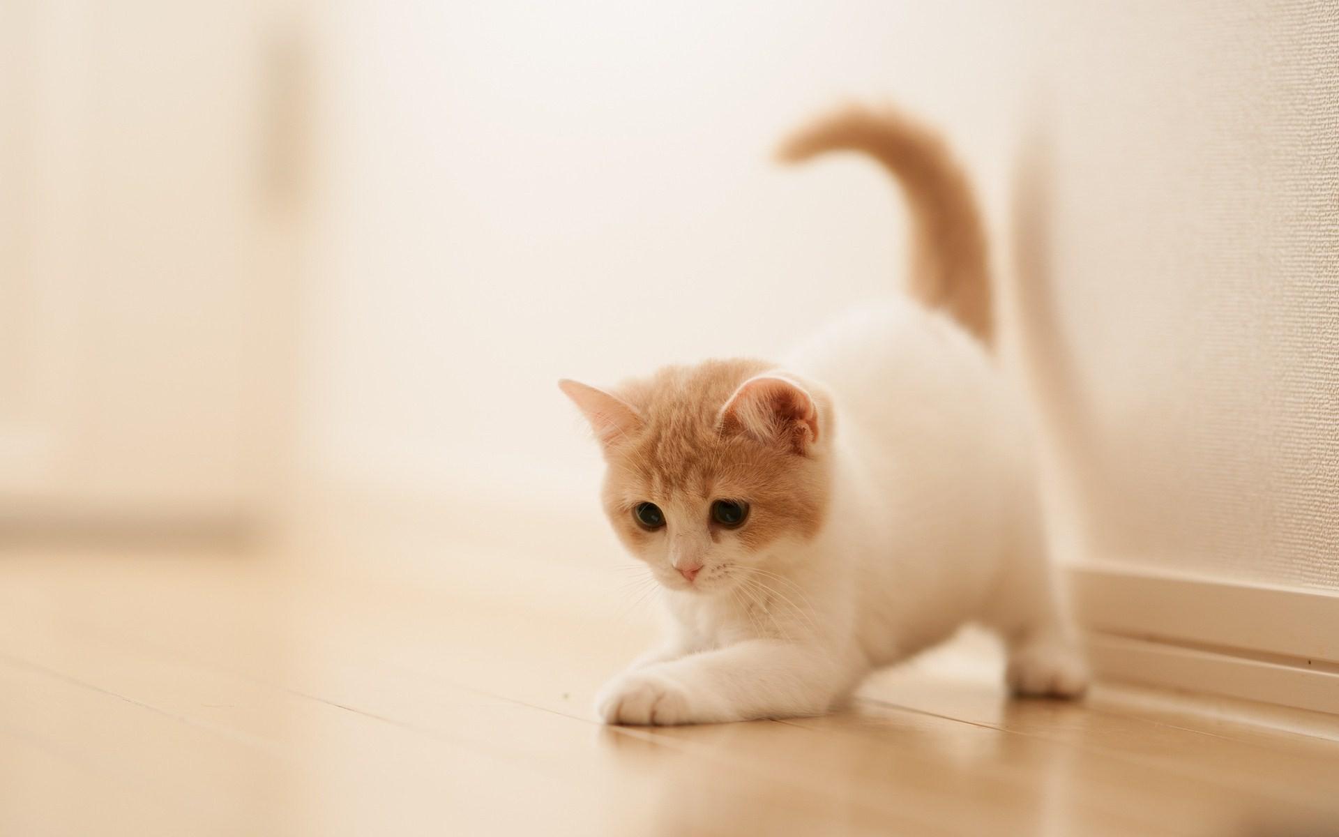 رعاية القطط اليتيمة