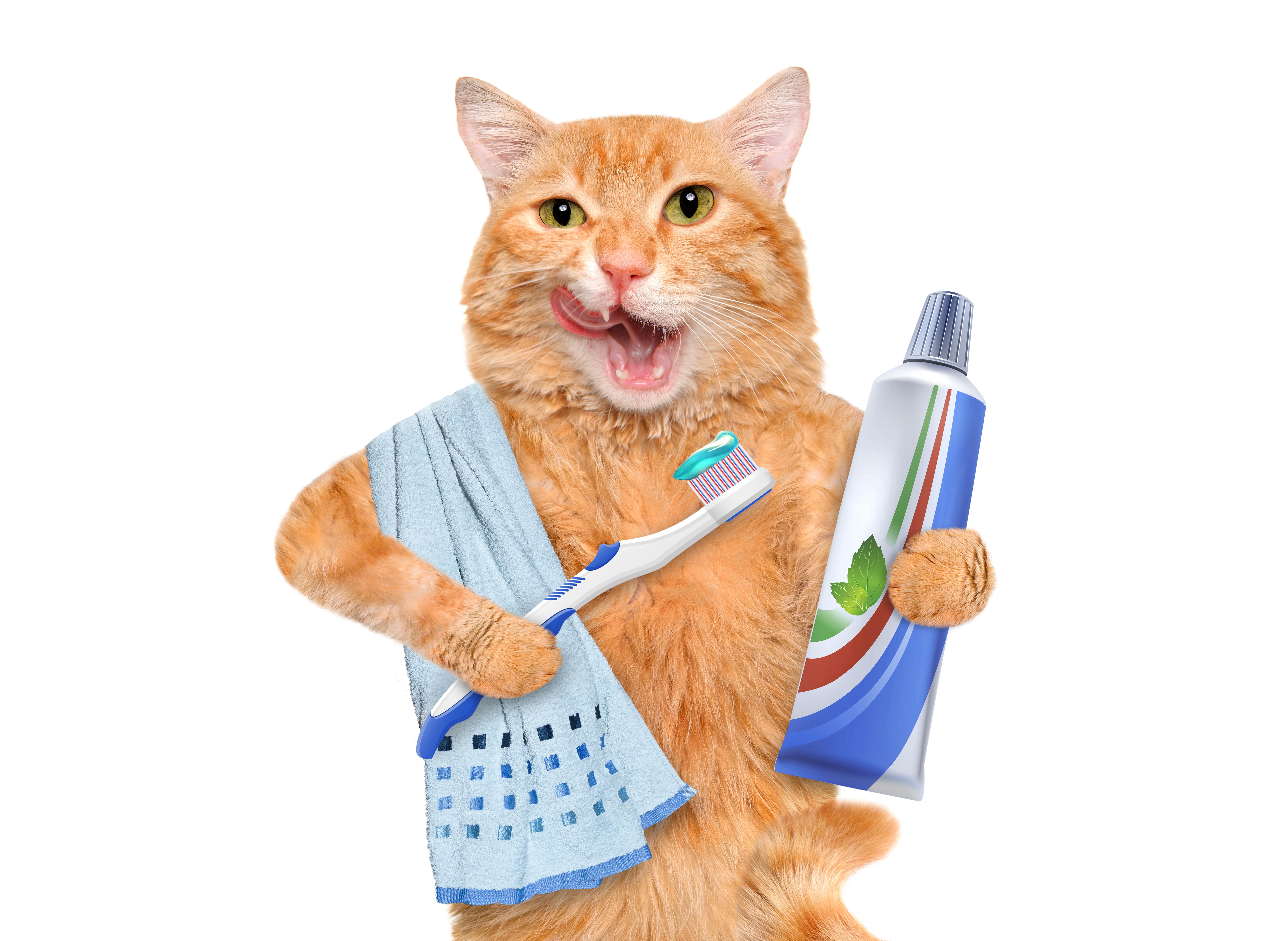 مستلزمات فضلات القطط
