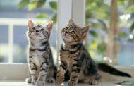 هل تفكر في شراء القط الجديد