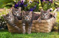 صور جميلة قطط صغيرة