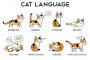 تعلم فن تدليل القطط