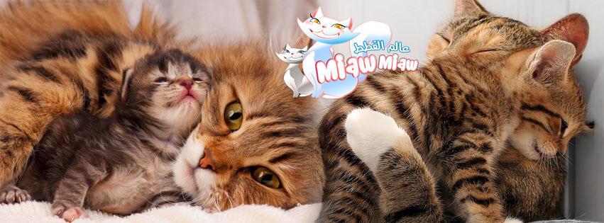 أجمل صور لحنان الأم القطط