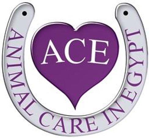 جمعية رعاية الحيوان في مصر ACE