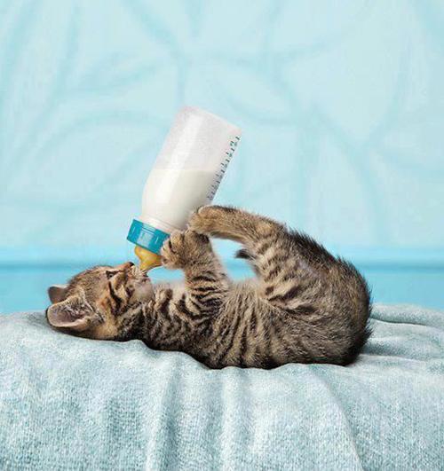 تعلم عن أهم حقائق وأسرار لا تعرفها عن القطط