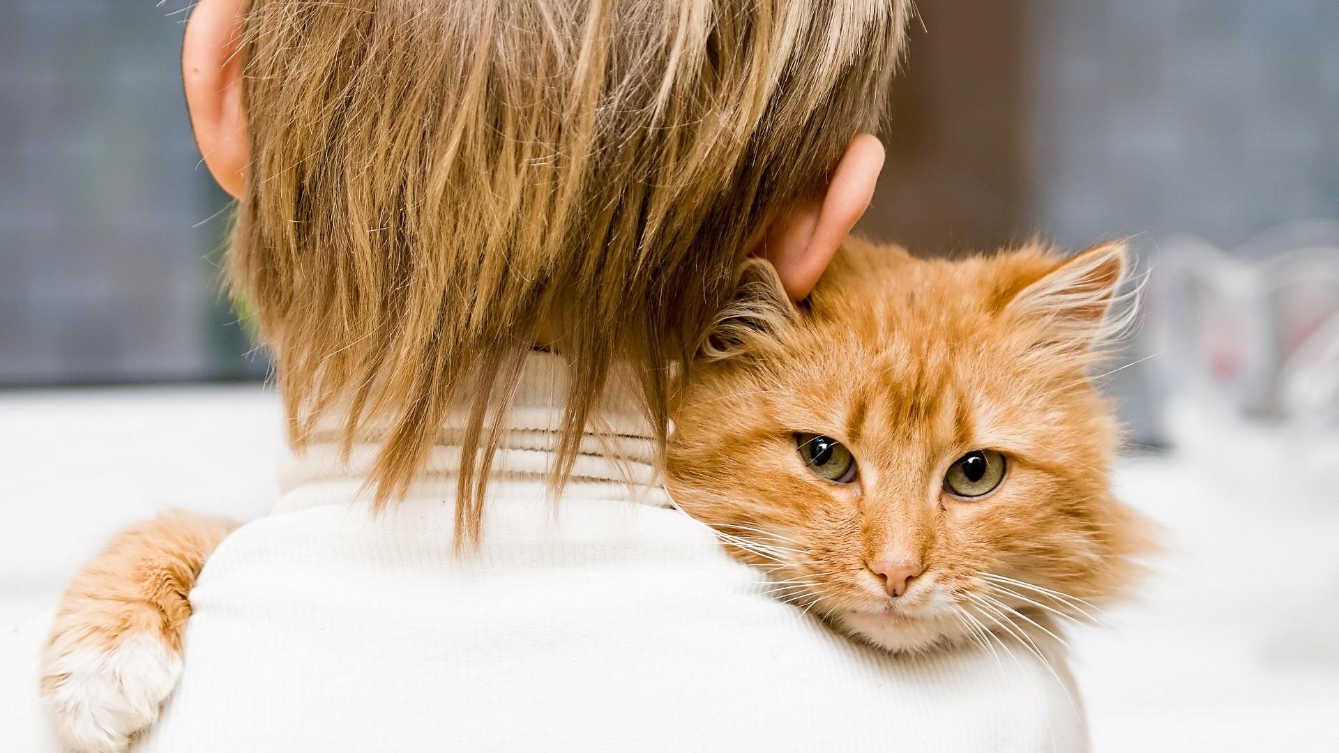 هل تستطيع ان تآكل القطط من طعامك الخاص